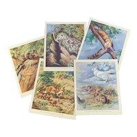 Five Vintage 1934 Animal Prints Book Plates Walter Alois Weber Old Ephemera