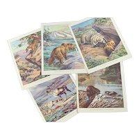Five Vintage 1930s Animal Prints Book Plates Walter Alois Weber Old Ephemera