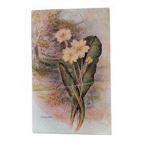 Vintage 1930's postcard, Primrose flower