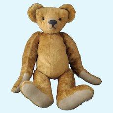 Antique Teddy bear, humpback, long snout