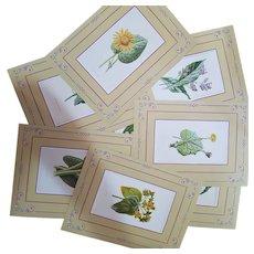 Eight chromolithos Wild Flowers 1878