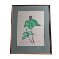 Botanical Artwork - Watercolor of Trillium Sessile, Signed Barbara Shirley