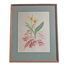 Botanical Artwork - Watercolor of Erythronium Americanum Liliaceae, Signed Barbara Shirley