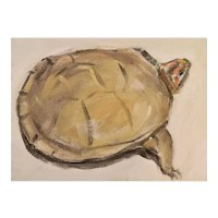 "Original oil on board ""Box Turtle"""