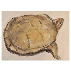 """Original oil on board """"Box Turtle"""""""