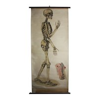 Skeleton Chart ca 1910