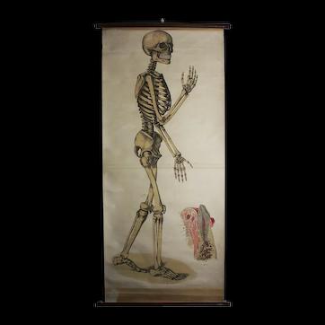 Skeleton Chart ca 1910
