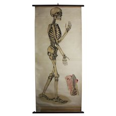 Skeleton Wall Chart ca 1910 -PRICE REDUCED
