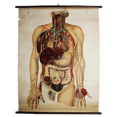 Antique  Medical Chart/ Anatomy