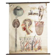 Antique  Medical Chart/ Anatomy -PRICE REDUCED