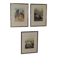 Set of 3 Framed Antique Bird Chromolithographs
