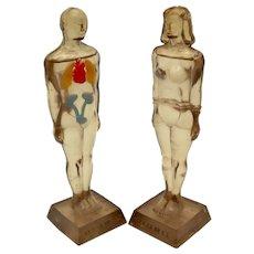 Diuril Merck Anatomical Figures Medical Advertising