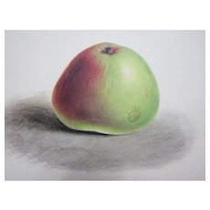 Victorian 19th century watercolour painting. Botanical study of an apple