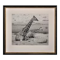 Clive Meredith b.1964.  English. Giraffes – Cow and Calf. Pencil on Paper. Framed.