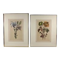 After Nicolas Robert (French, 1614-1685), Antique Hand Colored Engravings, Plates 9 and 14