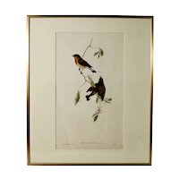 John Gould (1804-1881), Erythrosterna Parva, Hand Colored Lithograph, 1862-1873