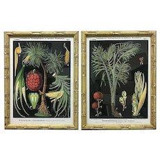 Framed Reproduction Zippel and Bollmann Botanical Wall Charts, a Pair