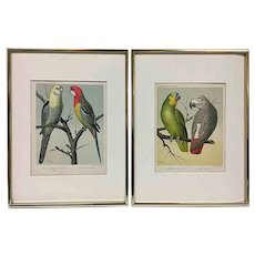 Framed Antique Chromolithographs, a Pair, Cassell's Canaries & Cage Birds c. 1880