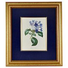 Framed Floral Print, Hindsia Violacea