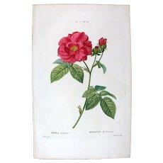 1799 Top Bessa Original Print With Antique Watercolour Folio Rose Rosa Gallica UA3