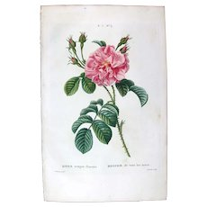 1799 Top Bessa Original Print With Antique Watercolour Folio Rose Rosa Semper Florens UA4