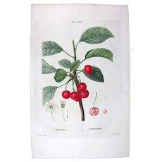 1799 Top Redouté Original Print With Antique Watercolour Folio Cerasus, Cerry fruit UA9