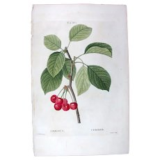 1799 Top Redouté Original Print With Antique Watercolour Folio Cerasus, Cerry fruit UAB