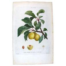 1799 Top Bessa Original Print With Antique Watercolour set -4- Folio Prunier De Sainte-Catherine Plum UBN