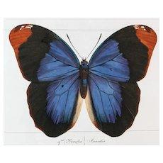 J.L.Emile Pauquet (1797-1871) Original Engraving on Exotic Butterflies - with Antique bright watercolour VS1