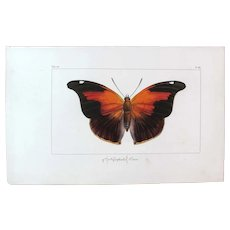 J.L.Emile Pauquet (1797-1871) Original Engraving on Exotic Butterflies - with Antique bright watercolour Orion Butterfly VS6