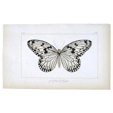 J.L.Emile Pauquet (1797-1871) Original Engraving on Exotic Butterflies - with Antique bright watercolour Agelia Butterfly VS7