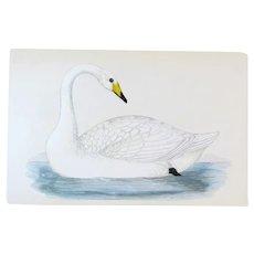 Benjamin Fawcett (1808-1893) - set -4- Original Prints with Superb Antique Watercolouring, Swan, Ducks, Grebe