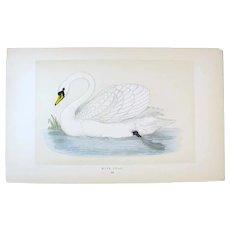Benjamin Fawcett (1808-1893) - set -3- Original Prints with Superb Antique Watercolouring, Mute Swan, Duck, etc