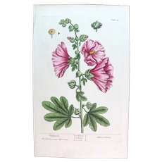 1735 True Elizabeth Blackwell Original Print With Antique Watercolour Large Folio HOLLY HOCHS XEA