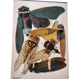 E. A. Seguy, Insectes (Insects) - Plate 1