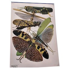 E. A. Seguy, Insectes (Insects) - Plate 8