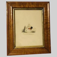 Antique Litho Hand Coloured Rooster