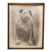 Antique dog photograph, framed