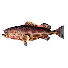 Shop Display Fish