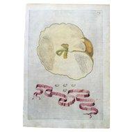 Antique 1646 Ferrari Botanical Lemon Citrus Engraving - Idem Citreum Dissectum Eiusque Semina