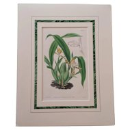 19th Century Botanical Orchid Print in French Mat by Samuel Curtis