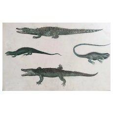 19th Century Oliver Goldsmith Crocodile / Lizard Engraving