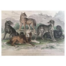 19th Century Oliver Goldsmith DOG and WOLF Engraving