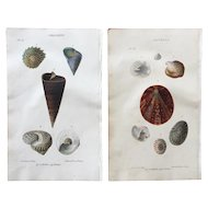 Pair 1823 John Mawe Sea Shell Lithograph Prints
