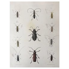 1854 EMMONS Entomology Long Horned BEETLE Print