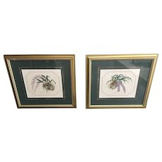 Pair Vintage Framed Botanical ORCHID Prints