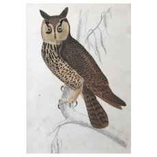 19th Century Oliver Goldsmith Long Eared Owl Engraving