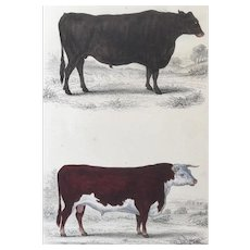 19th Century Oliver Goldsmith Hereford Cow and Suffolk Ox Engraving