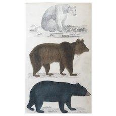 19th Century Oliver Goldsmith Bear Engraving Print