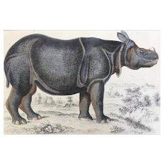 19th Century Oliver Goldsmith Rhinoceros Engraving Print